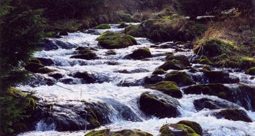 Tatra Mountain Stream